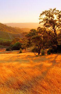 Sonoma County datiert online