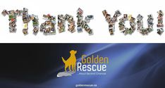 Our Online Auction is now CLOSED. Thank you to everyone who donated items and to all of you who took the time to bid and support Goldens in need. SPECIAL THANKS to Wanetta who organized and managed EVERYTHING to help make our 30th Anniversary Online Auction such a success! You are a true GOLDEN ANGEL! #goldenretriever #onlineauction #30years #anniversary #rescuedog Golden Events, Second Chances, The Day Will Come, 30th Anniversary, Above And Beyond, Rescue Dogs, Fundraising, Adoption, Thankful