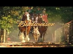 Bud Clyde Commercials 2 - Turtle Ranch I think the producers of the Super Bowl commercials should pay Budweiser to run their commercials. Clysdale Horses, Draft Horses, Breyer Horses, Budweiser Commercial, Commercial Ads, Pretty Horses, Beautiful Horses, Burritos, Clydesdale Horses Budweiser