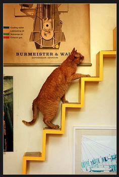 yellow stairs orange cat