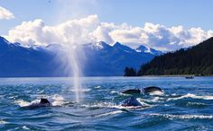 6 Reasons Kenai Fjords is the Most Extreme National Park