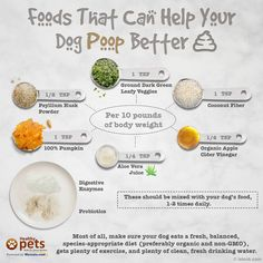 Foods that can help you dog poop better
