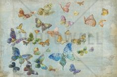 Butterflies - Wall Mural & Photo Wallpaper - Photowall