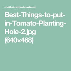 Best-Things-to-put-in-Tomato-Planting-Hole-2.jpg (640×468)