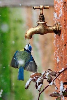 Foto Divertente: Uccello che beve da rubinetto in volo