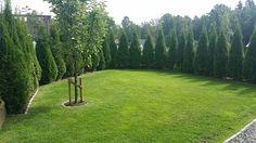 En klar del av nedre trädgården. Smaragdtöjor och äpoleträd. Naturgödslat gräs.