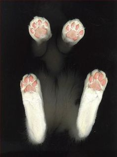 kitty paws, too cute