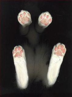 kitty paws, too cute