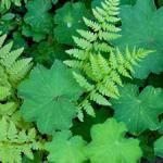 The Best Perennials for Any Yard