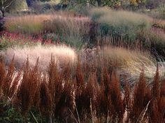 Pensthorpe, another public garden from Piet Oudolf, landscape genius.