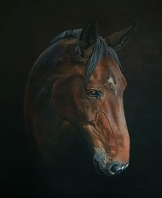 Horse Portraits Gallery by Andy Hunt