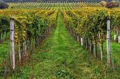 burgenland Austria