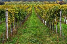 burgenland Austria Heart Of Europe, Wine Time, Salzburg, Alps, Vienna, Vineyard, Beautiful Places, Spaces, Travel