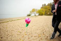 Роза на берегу моря...  #wedding #laver #lovestory #minsk #moscow #life #style #photo #time #day #flowers #rose #LAV #фотография #любовь #svadba #anastasialaver #свадьбавминске