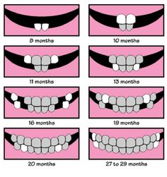 baby teeth chart. This way makes more sense to me.