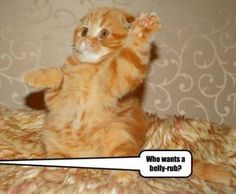 Funny Animals Of The Day (Cat Edition) - 24 Pics