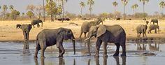 Elephant at a waterhole in Hwange National Park. www.walmarkafricasafaris.com