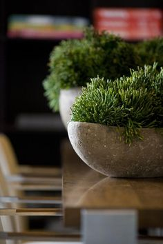 Succulents in pretty pots