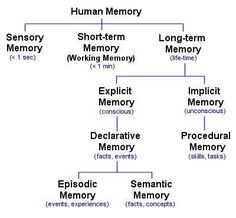 Types of Memory - The Human Memory Psychology Notes, Educational Psychology, Psychology Facts, Memory Psychology, Ap Psychology Review, Introduction To Psychology, Experimental Psychology, Types Of Psychology, Psychology Student