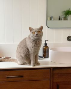 HardieGroove Lining creates a classic yet timeless look for your bathroom renovation Classic Bathroom, Warrior Cats, Flat Sheets, Home Interior Design, Interior Inspiration, The Hamptons, Poster Prints, Interiors, Pure Products