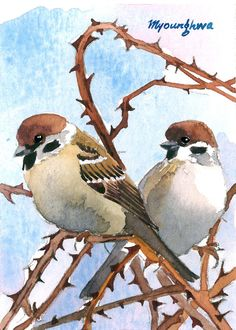 ACEO Limited Edition 3/25- Sparrow in thorny branches, Bird art print of an original watercolor by Anna Lee, Gift idea for bird lovers