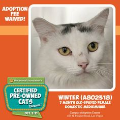*** ADOPTION FEE WAIVED THROUGH SUNDAY! *** Petite female seeks warm, caring companion for long-term relationship. Skilled ear-scratcher desired. Partner will receive lifetime of purrs, love. Interested? See Winter at the Campus Adoption Center!  Adoption fees for all cats 6 months and older are waived through 10/19. Meet your purr-fect companion at animalfoundation.com!