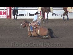 """Rodeo Horse, Leg Broken, Forced to Run. Rodeo people claim to love their animals. Watch what rodeo thugs do after a buck horse has his leg broken. Does this look like """"love"""" to you?"""