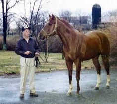 secretariat | Secretariat Looking for mares | Flickr - Photo Sharing!