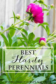 Best Hardy Perennials Tips from a DIY Gardener On Sutton Place Hardy Perennials, Hardy Plants, Flowers Perennials, Planting Flowers, Perennial Flowers For Shade, Dianthus Perennial, Part Sun Perennials, Best Perennials, Flower Gardening