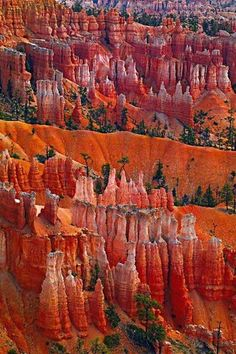 "Bryce Canyon. They're called ""hoodoos"" and they can be as tall as 10 stories!"