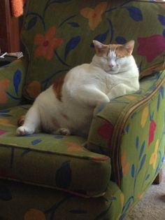 Aw he looks so cute getting ready to doze off in his arm chair he looks like my dad while his watching tellly 🤣🤣🤣🤣🤣🤣🤣 Baby Animals, Funny Animals, Cute Animals, Funny Horses, Fat Cats, Cats And Kittens, Crazy Cat Lady, Crazy Cats, I Love Cats