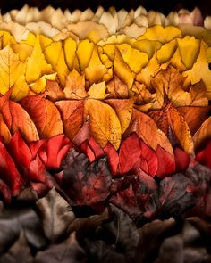 Autumn Photograph: Fall leaf autumn decor, rustic decor, nature photography, leaf collection