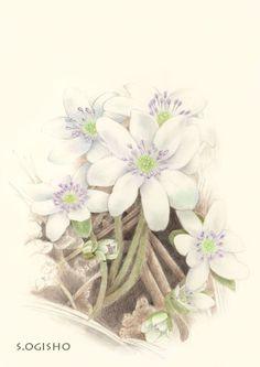 雪割草 Colored Pencils, Floral Wreath, Wreaths, Home Decor, Flower Crown, Decoration Home, Colouring Pencils, Door Wreaths, Crayons