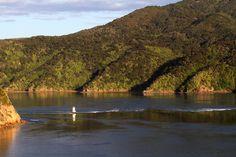 French Pass, Marlborough, New Zealand Marlborough Sounds Nz, French Pass, New Zealand Landscape, The Locals, Sustainability, Wildlife, Tours, River, Island