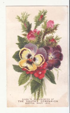 Youth-039-s-Companion-Boston-MA-Posy-of-Pansies-Vict-Card-c-1880s