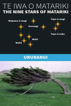 Te Iwa o Matariki Waitangi Day, Maori Words, Maori Symbols, Marine Plants, Pepper Tree, The Pleiades, Winter Sky, Maori Art, The Nines