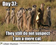 Hahahahaha. Just looking at the mere CAT standing up like that made me laugh.