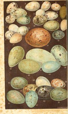 #oology #egg #birdegg