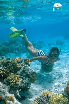 Tauchurlaub Ägypten - Faszination Tauchen im Roten Meer Das Rote Meer ist eines der schönsten Tauchgebiete der Welt. Lerne im Urlaub tauchen. In Ägypten findest du die schönsten Tauchgebiete! Hurghada, Makadi Bay, Sahl Hasheesh, Marsa Alam, Port Ghalib und Sharm El Sheikh  Das Rote Meer ist sehr bieliebt und Farbenfroh. #egypt #urlaub #travel #reisen #tauchen #diving #snorkling #redsea #rotesmeer #meer #farben #hurghada #sharm #makadi Marsa Alam, Egypt Travel, Red Sea, Life Goals, Scuba Diving, Under The Sea, Rum, Underwater, Beautiful Places