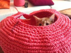 Crocheted Cat Nest