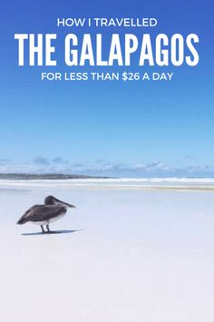 I travelled the Galapagos on a budget of less than $26 per day for an activity-packed three weeks. And it was totally easy! Here's how you can too.
