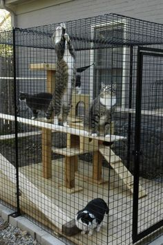 cat_enclosure_48