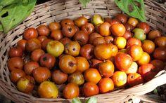 Jujube ou sidem Est un fruit ovale ou rond, de couleur jaune, puis rouge-brique à pleine maturité.  Sa peau est fine et comestible, et sa chair blanche translucide est douce et parfumée. On consomme ce fruit soit frais, soit en confiture ou confit, un peu comme des dattes. C'est un fruit très nutritif, très riche en vitamine C.