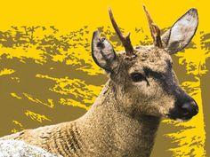 """""""Protege la Biodiversidad: 40 años de CITES en Chile"""" es el nombre de la exposición itinerante que recorre diversos puntos de la región de Valparaíso y Metropolitana y con la cual se conmemoran 4 décadas desde que nuestro país firmó la Convención sobre el Comercio Internacional de Especies Amenazadas de Fauna y Flora Silvestres (CITES) que protege más de 300 especies locales."""