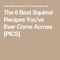 The 6 Best Squirrel Recipes You've Ever Come Across [PICS]
