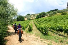 *Horse Riding in Chianti Day Trip from Florence - Florence | Viator