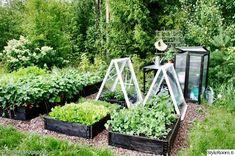 My Garden - Sisustuskuva jäseneltä idahhh - StyleRoom. Potager Garden, Garden Pool, Summer Garden, Garden Planters, Garden Beds, Garden Landscaping, Balcony Gardening, Small Gardens, Outdoor Gardens