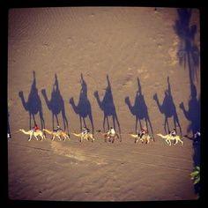 #Camel #trekking #Desert #Morocco Trekking, Tricks, Morocco, Camel, Deserts, Instagram Posts, Movie Posters, Painting, Art
