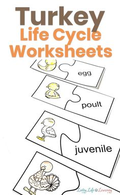 Make these turkey life cycle worksheets part of your fall holiday preparation! And learn more about where our famous fall feathered friend comes from!