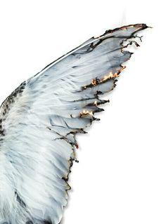 Картинка с тегом «wings, angel, and fire»